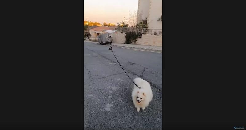 Image 1 : Confiné, un internaute promène son chien à distance avec un drone